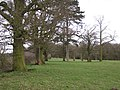 Parkland trees near Haseley Hall Farm - geograph.org.uk - 1777516.jpg