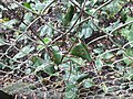 Parmadan Forest 20.jpg