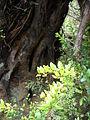 Parque nacional Chiloe- Camino Al artesano.JPG