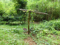 Passiflora coccinea at Queen Sirikit Botanic Garden - Chiang Mai 2013 2668.jpg