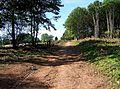 Path on the edge of Shrawley Wood - geograph.org.uk - 1484913.jpg
