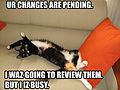 Pending Changes Cat.jpg