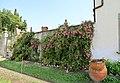 Pescia, villa la guardatoia, giardini, roseto 01.jpg