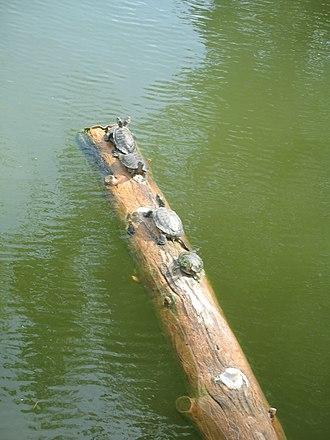 Phoenix Zoo - A balancing act at the zoo