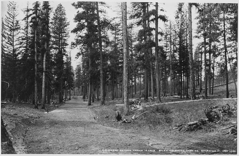 File:Photo by Ladd of fresh grade for a logging railroad in the Moses Mountain unit. Double tracks were laid along this... - NARA - 298693.jpg