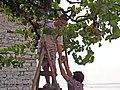 Picking grapes in Berat.jpg