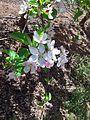 PikiWiki Israel 43186 Plants of Israel.jpg