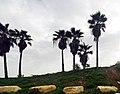 PikiWiki Israel 74685 hod hasharon park.jpg