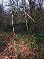 Pillbox A113, Old Lodge Warren - geograph.org.uk - 648123.jpg
