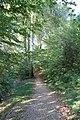 Pine walk, Shaftesbury, Dorset - geograph.org.uk - 1007890.jpg