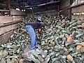 Pineapple wholesale.jpg