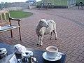 Ponderosa Cafe patio - geograph.org.uk - 541874.jpg
