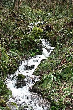 Porlock, stream in Culbone Combe - geograph.org.uk - 358226