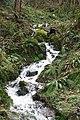 Porlock, stream in Culbone Combe - geograph.org.uk - 358226.jpg