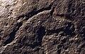 Prótomo de caballo - Cueva del Moro (Tarifa) - Arte Sureño Andaluz.jpg