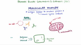ملف:Primary biliary cholangitis.webm