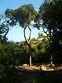 Prop del Baixador de Vallvidrera P1320918.jpg