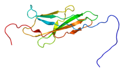 Protein SDK2 PDB 1wf5.png