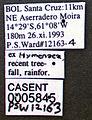 Pseudomyrmex niger casent0005845 label 1.jpg