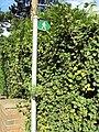 Public footpath, Vicar's Cross golf course.JPG