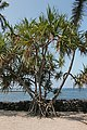 Puuhonua o Honaunau Historical Park, Captain Cook - panoramio (3).jpg