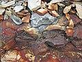 Pyrite atop chert nodule (Delaware Limestone, Middle Devonian; Emerald Parkway roadcut, Dublin, Ohio, USA) 2 (42142840942).jpg