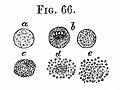 "R. Virchow's lecture IX, ""Cellular Pathology"", 1860 Wellcome L0020581.jpg"
