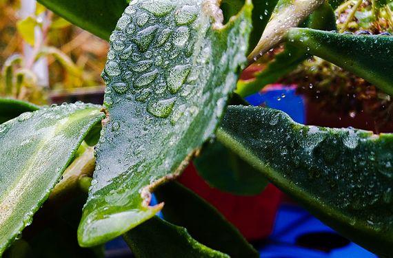 Rain on Leaf.JPG