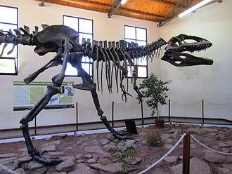 Giganotosaurus - Reconstructed skeleton, EBPM