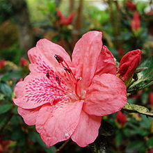 Image result for japanese flower