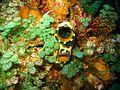 Reef0601 - Flickr - NOAA Photo Library.jpg