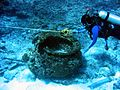 Reef3691 - Flickr - NOAA Photo Library.jpg