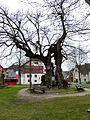Reichenau Mittelzell - Ergat 2 Linde.jpg