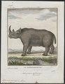 Rhinoceros bicornis - 1700-1880 - Print - Iconographia Zoologica - Special Collections University of Amsterdam - UBA01 IZ22000201.tif