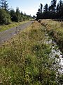 Ride through Halwill Moor Plantation - geograph.org.uk - 513497.jpg