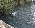 River Test, Middlebridge.jpg