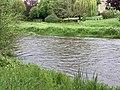 Rivière Cousin - Vault-de-Lugny (FR89) - 2021-05-17 - 1.jpg