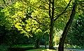 Road and trees, Crawfordsburn Country Park - geograph.org.uk - 976793.jpg