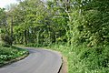 Road and woodland near Lenacre Hall Farm - geograph.org.uk - 417914.jpg