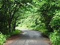 Road inside SGNP 04.jpg