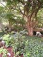 Rodef Shalom Biblical Botanical Garden - IMG 1302.JPG