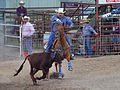 Rodeo, Texas, USA (14496685173).jpg