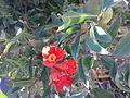 Rodier flori.114.jpg