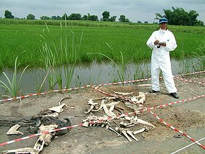 Body farm - Roma Khan conducting preliminary work on decomposition of cattle.