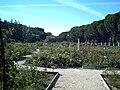 Rosaleda del Parque del Oeste (Madrid) 01.jpg