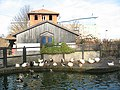 Rotherhithe City Farm - ducks - geograph.org.uk - 1085911.jpg