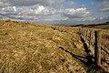 Rough grazing on Collieston Moor - geograph.org.uk - 1717718.jpg