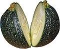 Round zucchini 2.jpg