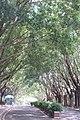 SZ 深圳 Shenzhen 福田 Futian 紅荔路 Hongli Road 蓮花山 Lianhuashan Park GD Greenway trees lane Sept 2017 IX1 02.jpg
