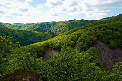 Saar-Steilhänge Lutwinuswald-04.jpg